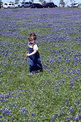 bluebonnets2009_26 (SavaTheAggie) Tags: flowers 6 college field station highway texas vibrant bluebonnet bryan tradition brenham 290