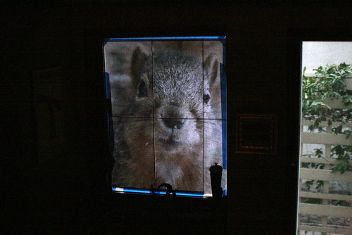 April Fool's Squirrel Invasion