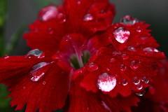 Rain on the Flowers
