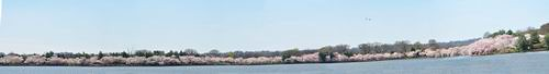 Tidal Basin-whole view 3.jpg