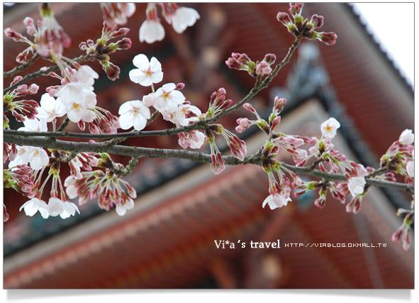 【京都春櫻旅】京都旅遊景點必訪~京都清水寺之美京都清水寺9