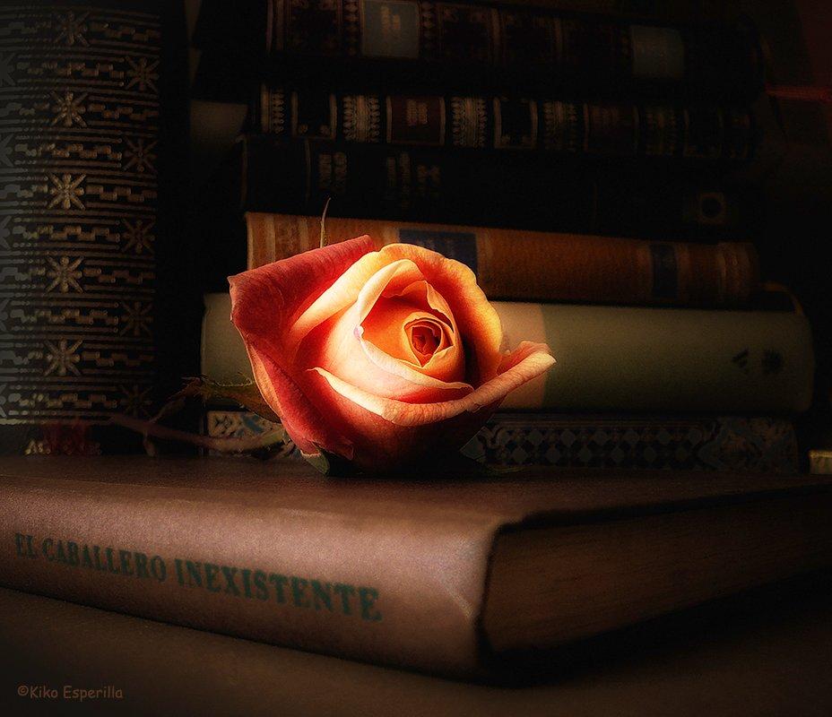 Libros, libros, libros... más libros ¡por favor!