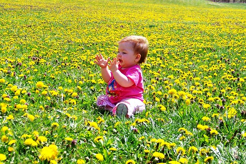 Clapping in the dandelions
