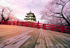 Hirosaki Castle Japan  Glenn Waters (Explored) 3,300 visits to this photo. Thank you. (Glenn Waters in Japan.) Tags: bridge castle japan spring nikon wide explore aomori  sakura cherryblossoms hirosaki japon    14mm japanesecastle    5photosaday explored  nikond700  glennwaters nikkorafs1424mmf28