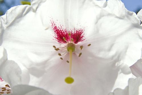 Crystal Springs Rhododendron Garden 027