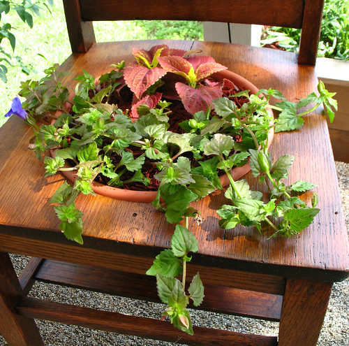 planter chair 3