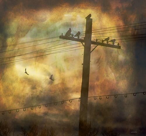 ~~ stillness and flight ~~