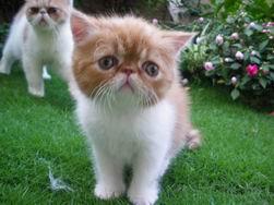 調整大小kitten135_0503222408_2145809117