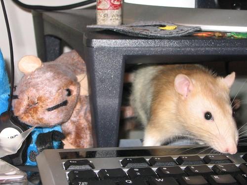 Justice the rat 5/6/2009