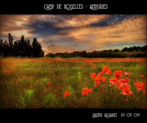 Camp-de-roselles