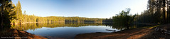 Lyons Reservoir a Panorama (David 'Art' the Visual Artist) Tags: california blue trees sky panorama lake reflection water pine mi forest reservoir redwood sunray lyons wuk