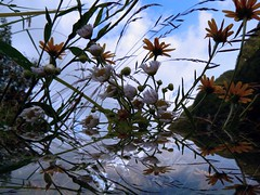 daydream (perplesso42) Tags: flowers reflections fiori daydream questfortherest fantasticare