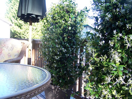 Backyard Parties <br> & New Plants for Privacy!