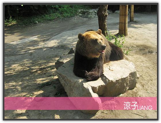 愛寶樂園(動物篇)13