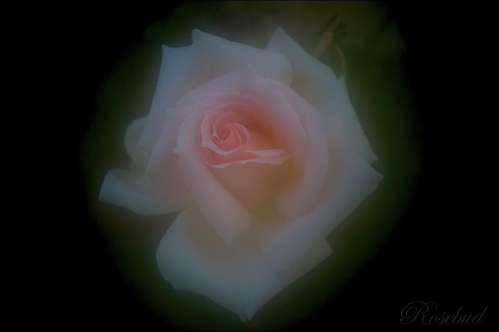 4332 ©2009 RosebudPenfold
