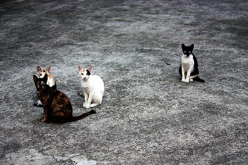 compound cats