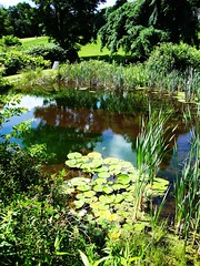 Lilypads :) (SurFeRGiRL30) Tags: trees plants sun sunlight reflection nature water colors grass sunshine reflections reeds daylight newjersey pond bush rocks shadows mud natural bright 17thcentury peaceful sunny historic reflect daytime much ripples lilypads sunlit breeze bushes shrubs shrubbery victorianera historicallandmark ringwoodmanor ringwoodnj ringwoodstatepark