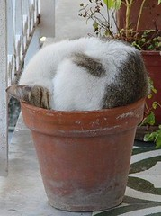 Kitty Pot