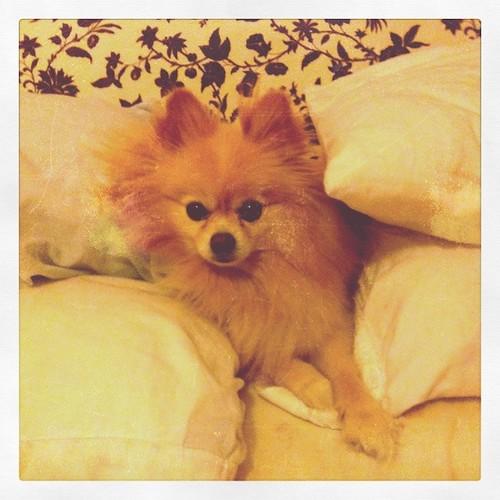 Aslan between pillows