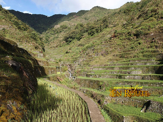 The first rice terraces to pass at the back of Batad Trail