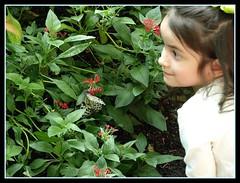 Amazement (Armanius) Tags: portrait cute museum butterfly children kid natural houston olympus exhibit amazement zuiko sciences cockrell e510 40150mm 40150