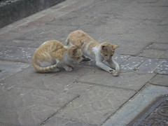 在大街上玩耍的雙胞胎小貓