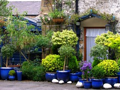 Seen on a Side Street in Bakewell, Derbyshire (UGArdener) Tags: blue england english gardens unitedkingdom britain stones derbyshire july pots summertime bakewell containers sidestreet englishgardens englishtravel