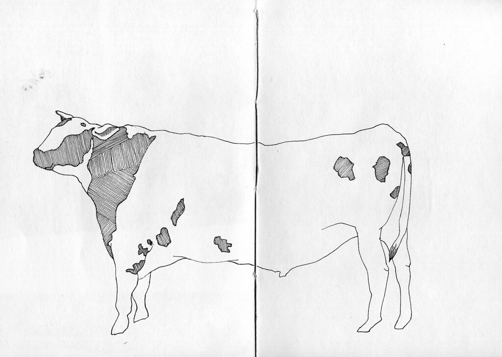 Cow drawing by Sarah