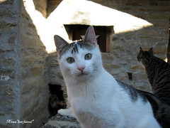 Pizza???? What's pizza???? (Xena*best friend*) Tags: wood wild italy pet cats fur chats furry woods feline tiger kitty kittens pizza piemonte gato antoniobanderas gatto katzen woodstove feral wildanimals michaeld michaeldouglas canondigitalixus50 piedmontitaly impressedbeauty antoniob cookingonwoodstove