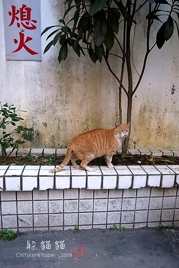 機車巷子躲貓貓01