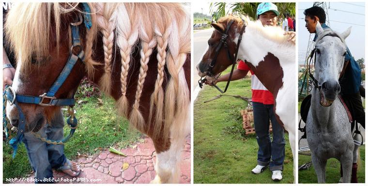 Carnival-horsing-around