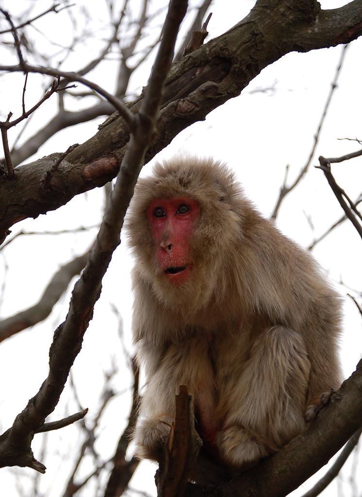 monkey-8