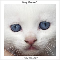 Bienvenue dans notre monde, petit chat (Michel Seguret) Tags: fab pet white color verde green eye blanco nature colors animal animals cat fun ojo tiere eyes nikon chat colorful couleurs royal vert oeil yeux gato enjoy sensational click katze grn augen fabulous iq animaux colori weiss blanc auge animale shiningstar naturesbest tier regard chaton smrgsbord enjoylife objektif nikond200 flickrsbest amazingcapture bestmoment royalgroup diamondheart diamondstars thisphotorocks thebestmoment flickrestrellas thebestoftheday checkoutmynewpics gnnenlyisi colourvisions overtheshot flickrovertheshot nikonflickraward flickrverte naturallymagnificent momentdimagination flickrpopularphotographer croquenature doubledragonawards allkindsofmacroscloseups mbpictures mostbeautifulpictures michelseguret
