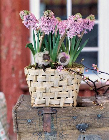 hyacinthsCL