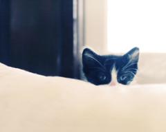 Minimalist Minicat (Mary Jane 2040) Tags: k kittens utata:project=ip71 waittillyouseethekittensudekstilllife kittensaremyanswertoworldwiderecessionglobalwarmingandsoforth