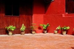 Pot plants (KC Toh) Tags: potplants redwall melaka