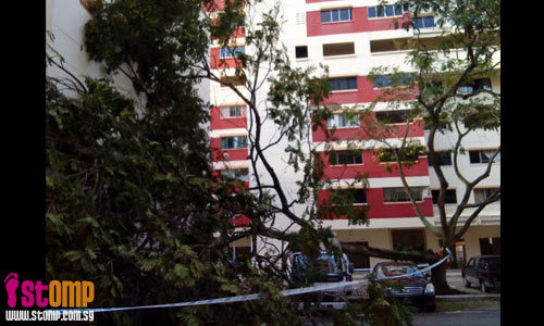 Strong winds cause tree to fall and damage pick-up