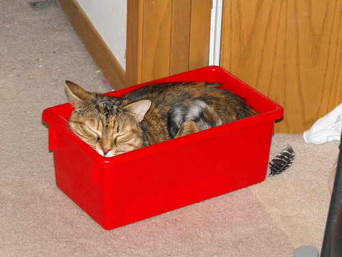 Red Cat Box