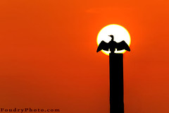 My Sun (A.alFoudry) Tags: winter orange sun black cold bird me silhouette sunrise canon wow eos big king kuwait usm 2009 ef kuwaiti q8 30d abdullah 400mm  conceited  kuw canoneos30d q80 f56l  xnuzha alfoudry canonef400mmf56lusm canon400l  abdullahalfoudry foudryphotocom