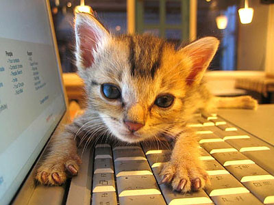 cat-on-keyboard