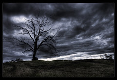 Making way... (Simon Diete) Tags: sky cloud tree grass dark grey nikon flickr dirt desaturated hdr classique d80 tonemaped