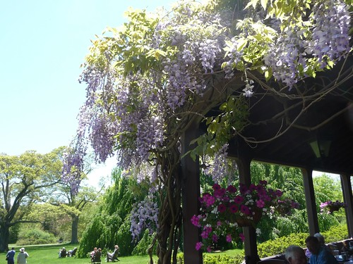 Wisteria over Porch