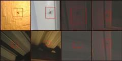 Arachnid-paloosa