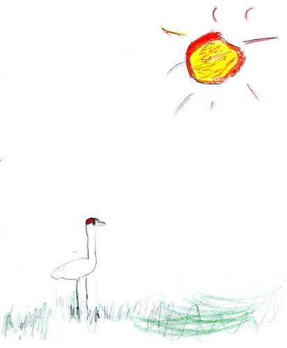 Sandhill Crane by JD Boy (age 6)