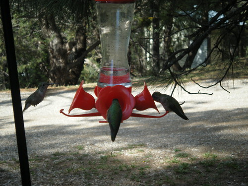 Humming Birds in Ruidoso, NM