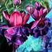 abundance: by elizabeth chapman