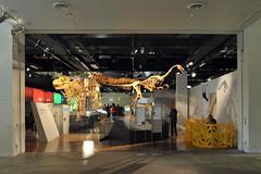 Melbourne 2009 - Melbourne Museum (11)