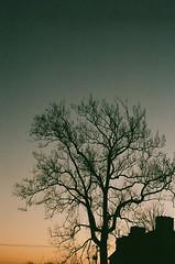 (kate oelmann.) Tags: sunset tree gradient nikonn2000