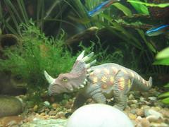 (Mocosito) Tags: aquarium dinosaur neontetra