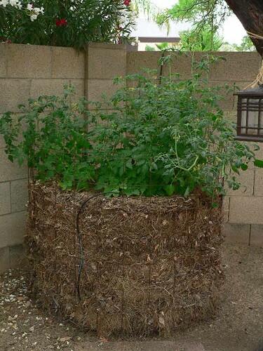 tomato0521